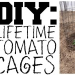 DIY: Lifetime Tomato Cages