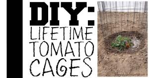 DIY: Lifetime Tomato Cages